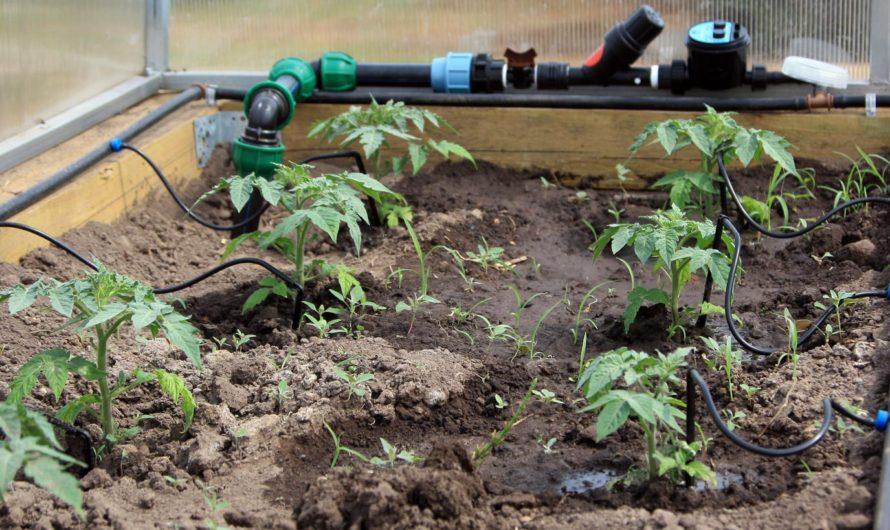 Лучший способ полива огорода на дачном участке